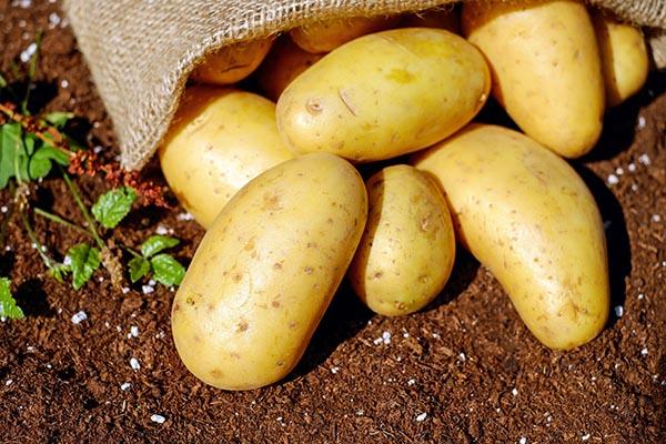 Bochumer Cilena Kartoffeln