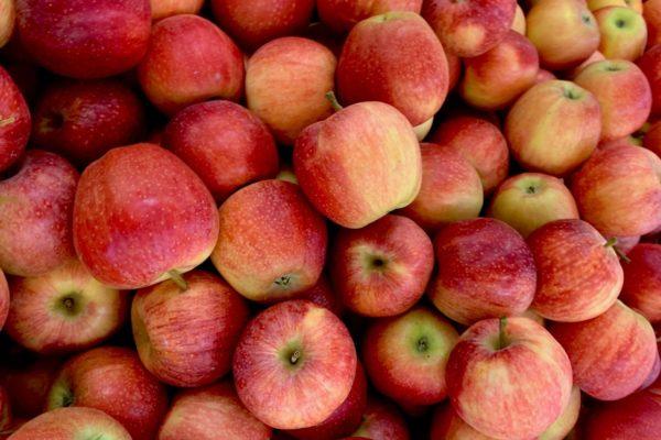 Frische Äpfel Aus Herten