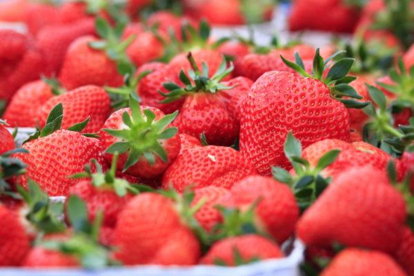 Frische Erdbeeren Bochum