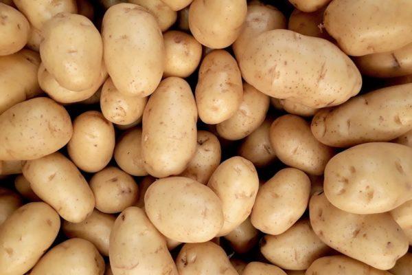 Frische Regionale Kartoffeln Bochum